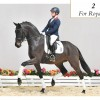Two geldings accepted for elite auction