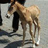 Gorgeous filly