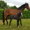 Diamantique's first foal is born!